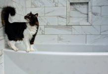 Znaczenie płytek Cersanit w aranżacji łazienki